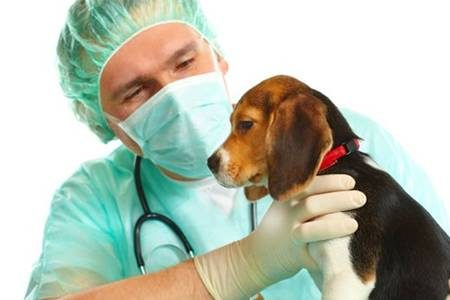 Clínica veterinaria Delicias